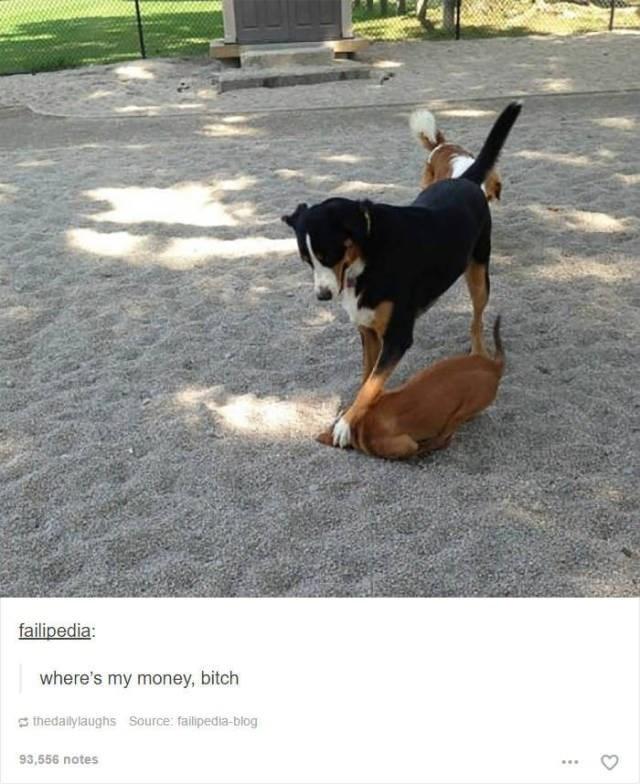 Dog - failipedia where's my money, bitch thedallylaughs Source: failipedia-blog 93,556 notes