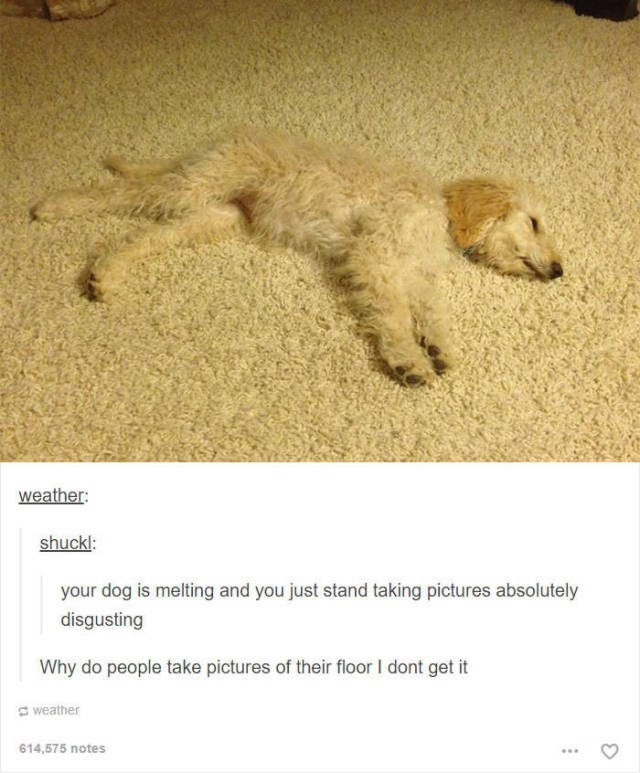 Dog - weather: shuckl: your dog is melting and you just stand taking pictures absolutely disgusting Why do people take pictures of their floor I dont get it weather 614,575 notes