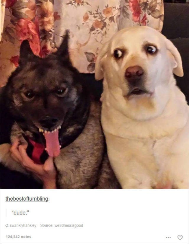 "Dog - thebestoftumbling: ""dude."" swanklyhankley Source: weirdnessisgood 124,242 notes"