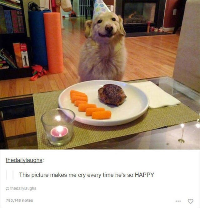 Canidae - thedailylaughs: This picture makes me cry every time he's so HAPPY thedailylaughs 783,148 notes