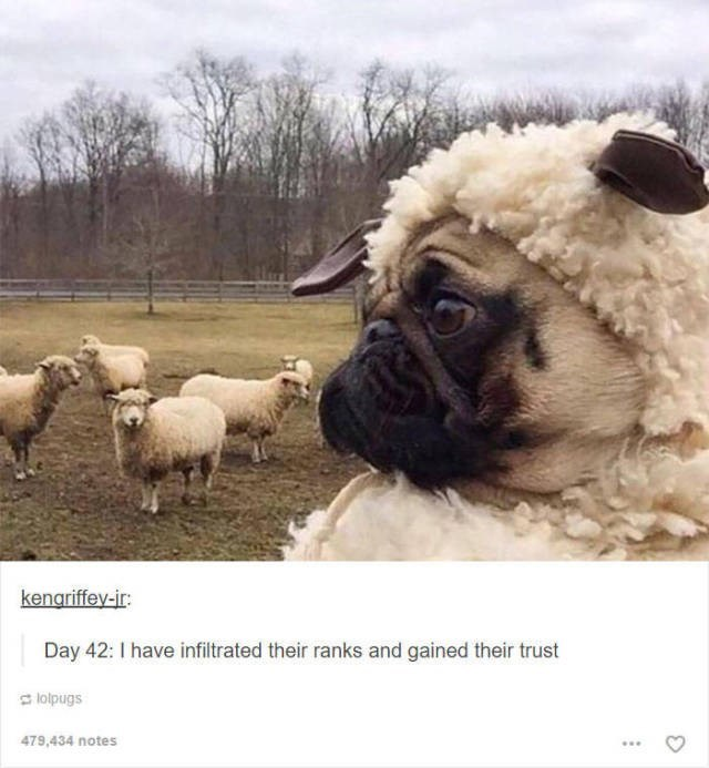 Mammal - kenariffey-ir: Day 42: I have infiltrated their ranks and gained their trust lolpugs 479,434 notes