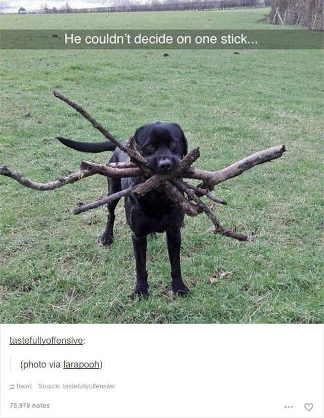 Dog - He couldn't decide on one stick... tastefullyoffensive: (photo via larapooh) heart Source: tastefullyoffensive 75,979 notes
