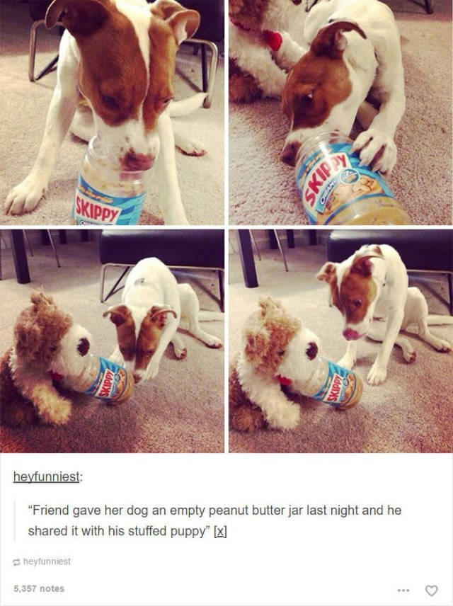 "Dog - ОKIPPУ heyfunniest: ""Friend gave her dog an empty peanut butter jar last night and he shared it with his stuffed puppy"" heyfunniest 5,357 notes КЛNS SKIP"