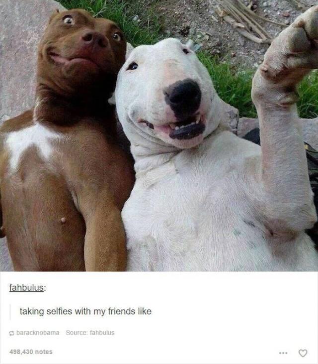 Canidae - fahbulus: taking selfies with my friends like baracknobama Source: fahbulus 498,430 notes