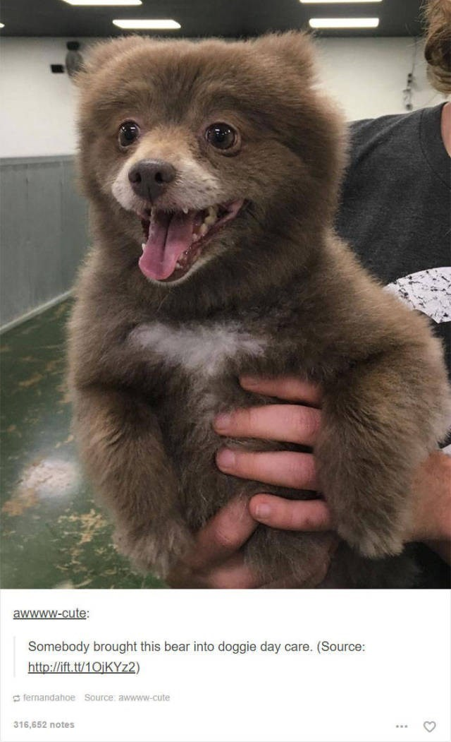 Mammal - awwww-cute Somebody brought this bear into doggie day care. (Source: http://ift.tt/10jKYz2) fernandahoe Source awwww-cute 316,652 notes