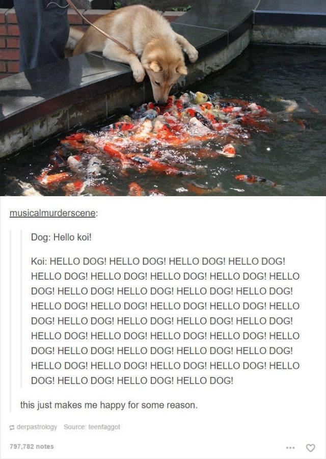 Adaptation - musicalmurderscene: Dog: Hello koi! Koi: HELLO DOG! HELLO DOG! HELLO DOG! HELLO DOG! HELLO DOG! HELLO DOG! HELLO DOG! HELLO DOG! HELLO DOG! HELLO DOG! HELLO DOG! HELLO DOG! HELLO DOG! HELLO DOG! HELLO DOG! HELLO DOG! HELLO DOG! HELLO DOG! HELLO DOG! HELLO DOG! HELLO DOG! HELLO DOG! HELLO DOG! HELLO DOG! HELLO DOG! HELLO DOG! HELLO DOG! HELLO DOG! HELLO DOG! HELLO DOG! HELLO DOG! HELLO DOG! HELLO DOG! HELLO DOG! HELLO DOG! HELLO DOG! HELLO DOG! HELLO DOG! HELLO DOG! this just makes m