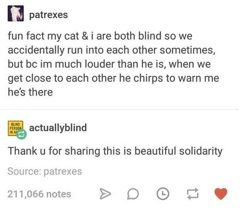 Text - patrexes fun fact my cat & i are both blind so we accidentally run into each other sometimes, but bc im much louder than he is, when we get close to each other he chirps to warn me he's there BUIND PERSON N A actuallyblind Thank u for sharing this is beautiful solidarity Source: patrexes 211,066 notes