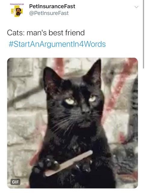Cat - racestco PetlnsuranceFast @PetlnsureFast Cats: man's best friend #StartAnArgumentIn4Words GIF