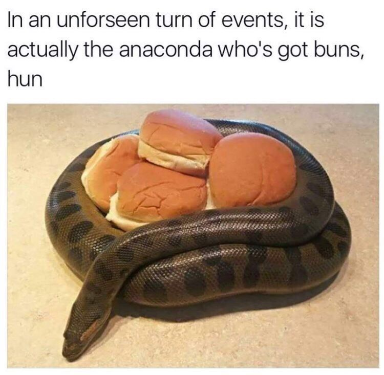 Reptile - In an unforseen turn of events, it is actually the anaconda who's got buns, hun