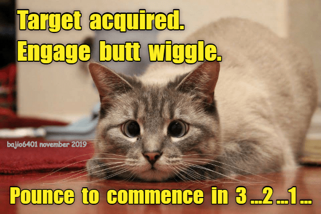 Cheezburger Image 9392783104