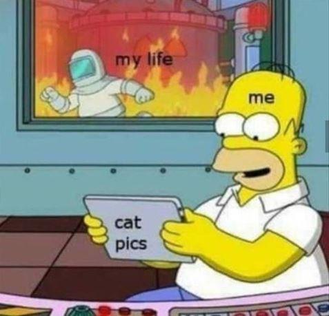 Cartoon - my life me cat pics
