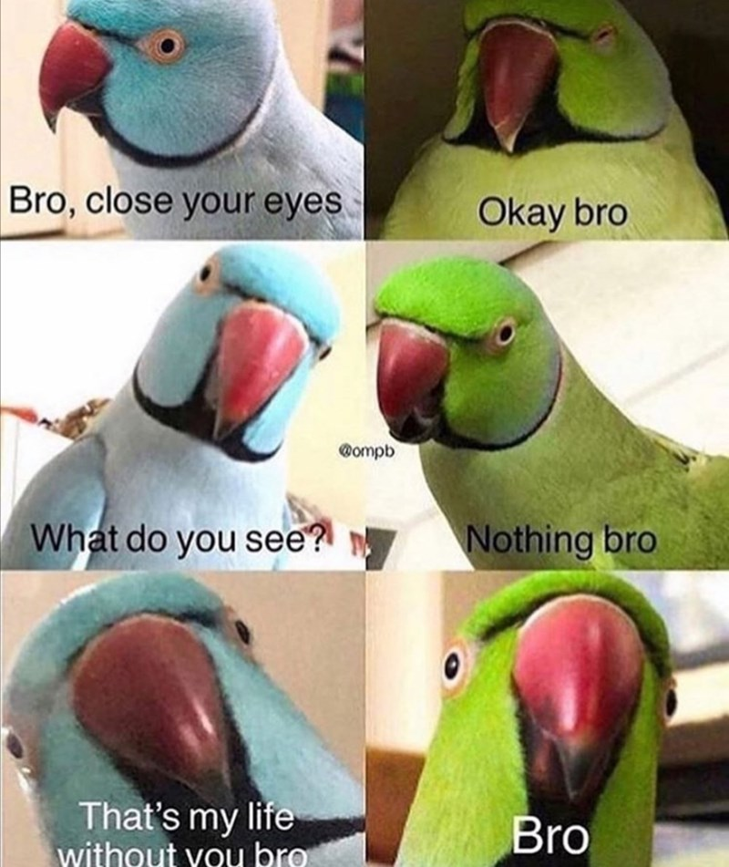 Funny and cute meme about a parrot bromance