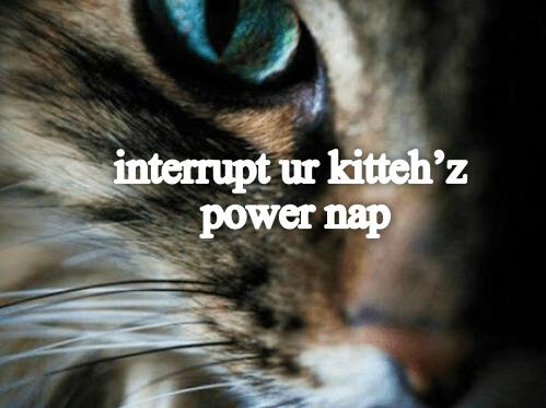 cat memes - 9393391360