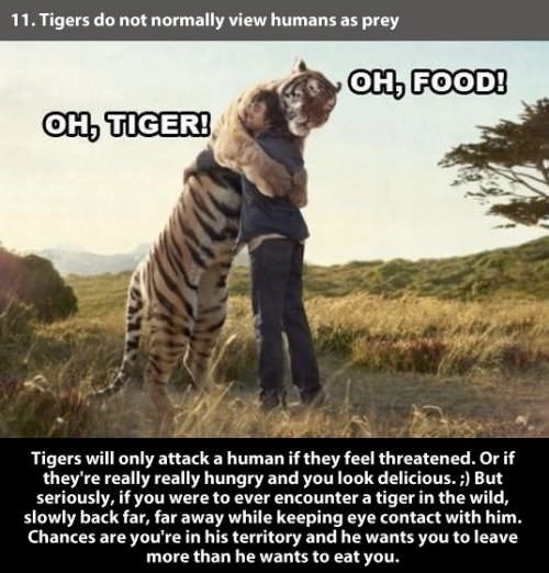 Wildlife - 11. Tigers do not normally view humans as prey оң FOODI OH TIGER! Tigers will only attack a human if they feel threatened. Or itf they're really really hungry and you look delicious. ) But seriously, if you were to ever encounter a tiger in the wild, slowly back far, far away while keeping eye contact with him. Chances are you're in his territory and he wants you to leave more than he wants to eat you