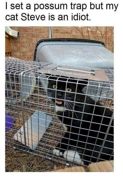 Cage - I set a possum trap but my cat Steve is an idiot.