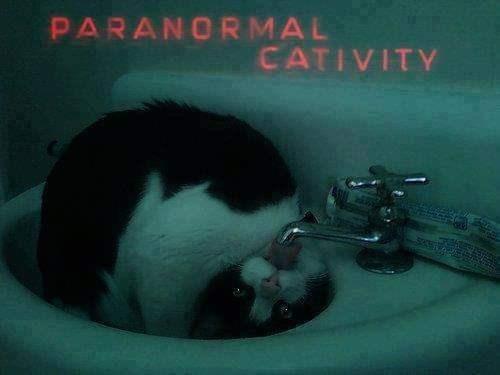 Photo caption - PARANORMAL CATIVITY