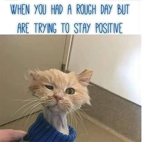 Cat - WHEN YOU HAD A ROUGH DAY BUT ARE TRYING TO STAY POSITIVE
