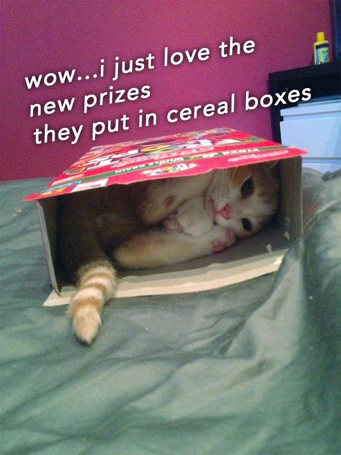 Cat - wow...i just love the new prizes they put in cereal boxes