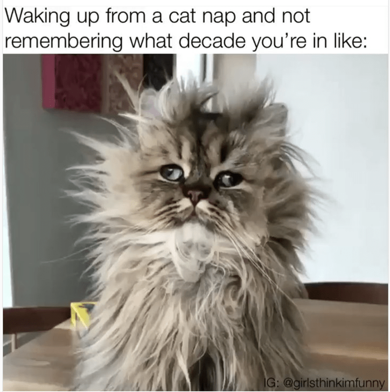 Cat - Waking up from a cat nap and not remembering what decade you're in like: IG: @girlsthinkimfunny