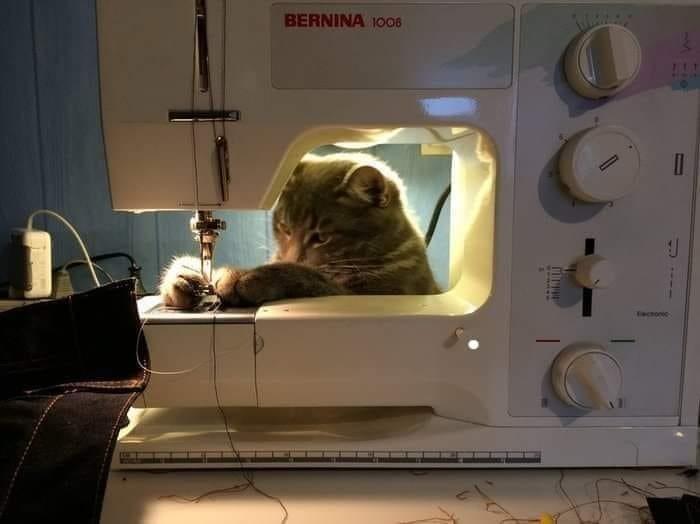 Cat - BERNINA 1008 Tatoc