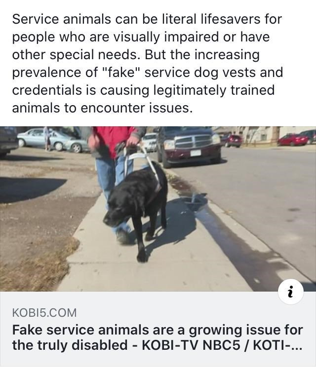 """Canidae - Service animals can be literal lifesavers for people who are visually impaired or have other special needs. But the increasing prevalence of """"fake"""" service dog vests and credentials is causing legitimately trained animals to encounter issues. KOBI5.COM Fake service animals are a growing issue for the truly disabled KOBI-TV NBC5/ KOTI-..."""