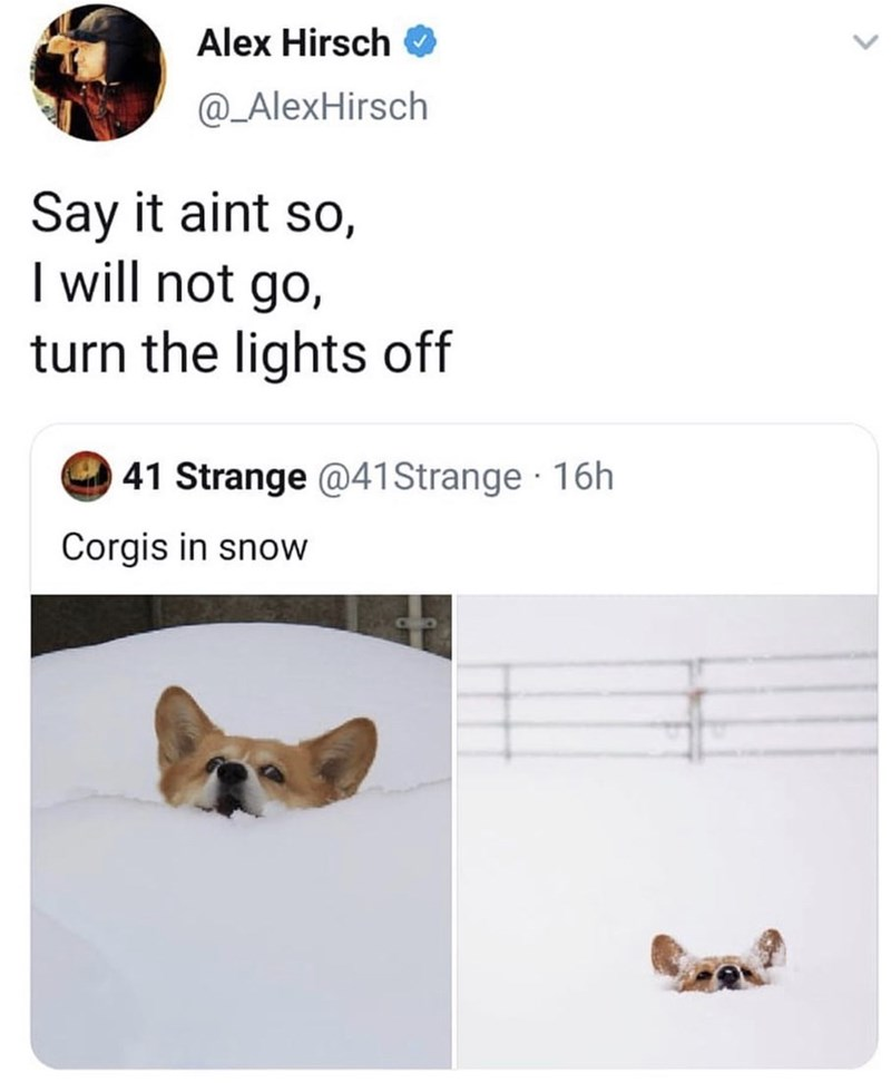 Text - Alex Hirsch @_AlexHirsch Say it aint so, I will not go, turn the lights off 41 Strange @41 Strange 16h Corgis in snow