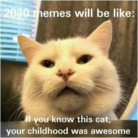cat memes - 9394685440