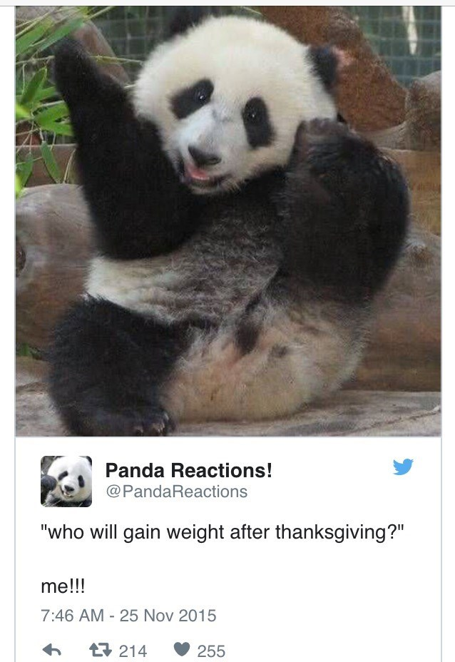 "Panda - Panda Reactions! @PandaReactions ""who will gain weight after thanksgiving?"" me!!! 7:46 AM 25 Nov 2015 t214 255"