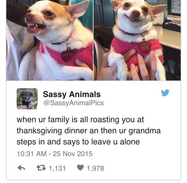 Dog - 14-453 901 aMDR LILY LU Sassy Animals @SassyAnimalPics when ur family is all roasting you at thanksgiving dinner an then ur grandma steps in and says to leave u alone 10:31 AM 25 Nov 2015 t1,131 1,978