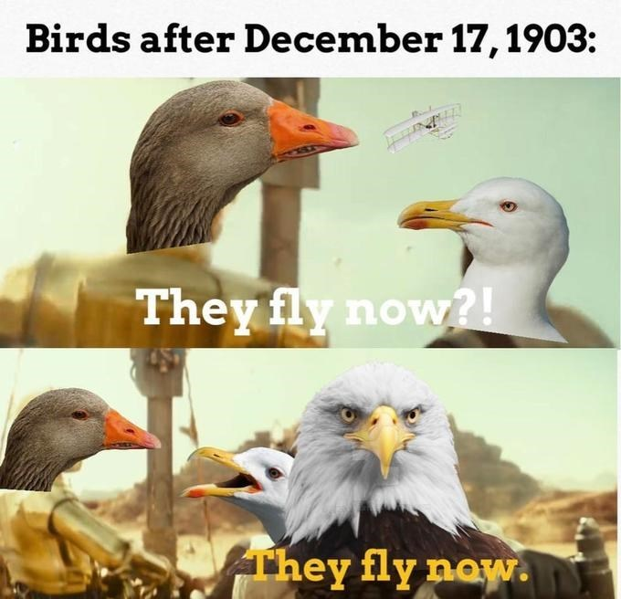 Bird - Birds after December 17, 1903: They fly now?! They fly naw.