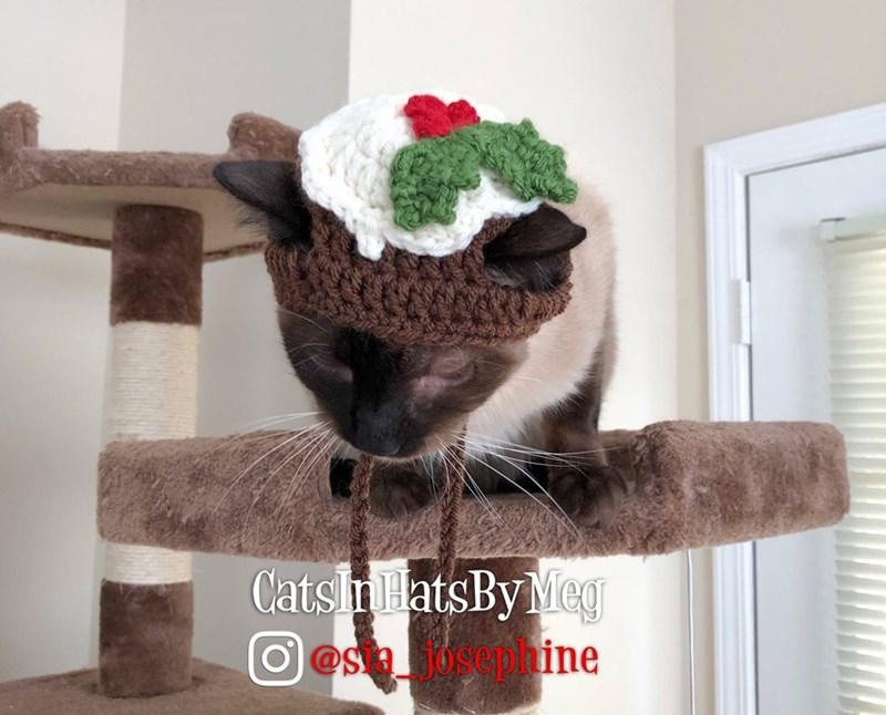 Cat - Cats n HatsBy Meg O@Saosephine