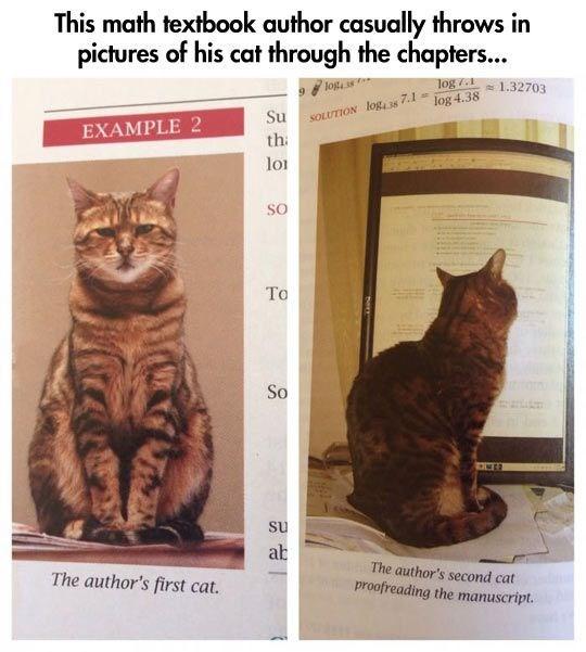 cat memes - 9395128832