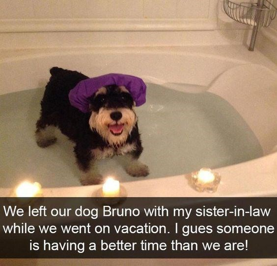 Dog - We left our dog Bruno with my sister-in-law while we went on vacation. I gues someone is having a better time than we are!