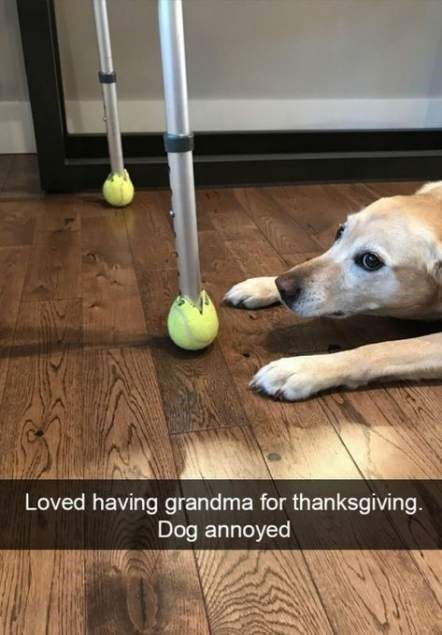 Tennis ball - Loved having grandma for thanksgiving. Dog annoyed