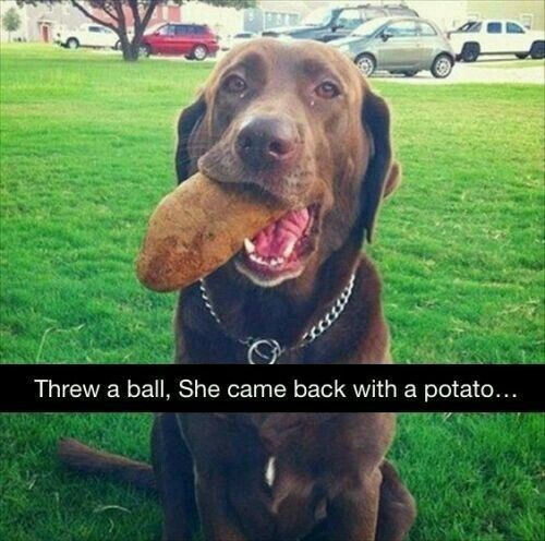 Dog - Threw a ball, She came back with a potato...