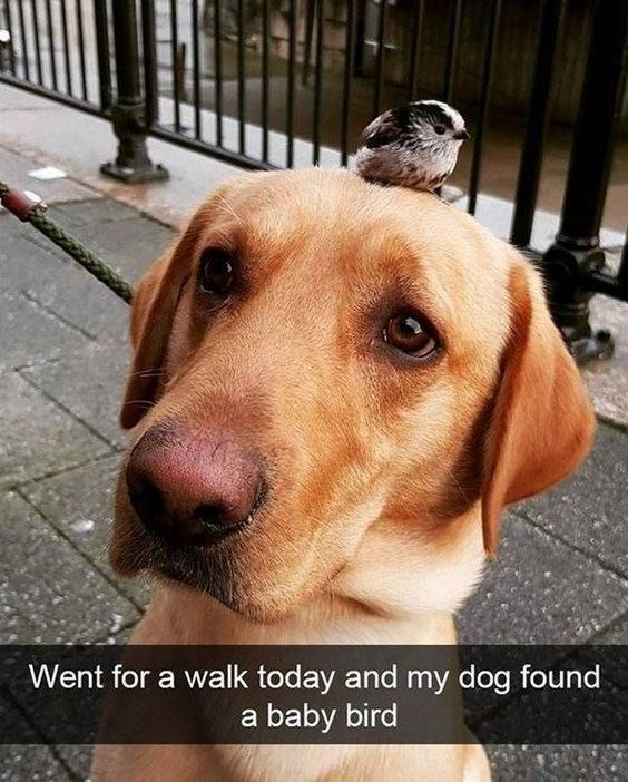 Dog - Went for a walk today and my dog found a baby bird