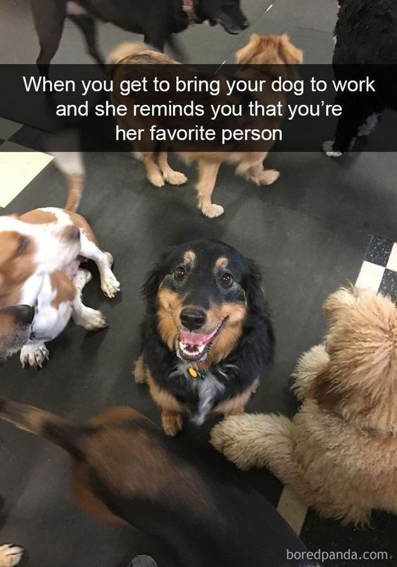 Dog - When you get to bring your dog to work and she reminds you that you're her favorite person boredpanda.com