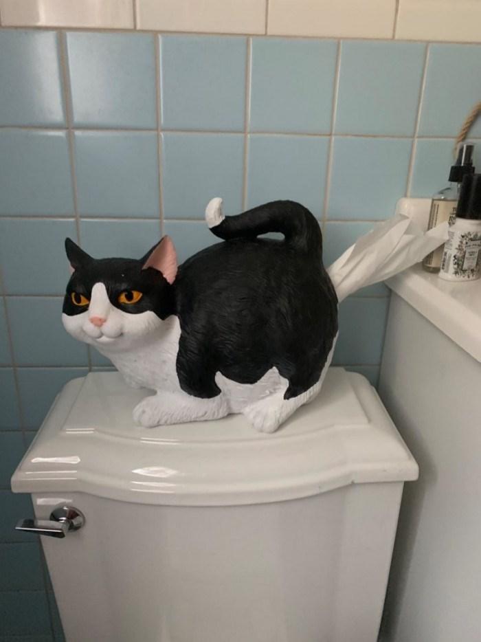 Cat - B42