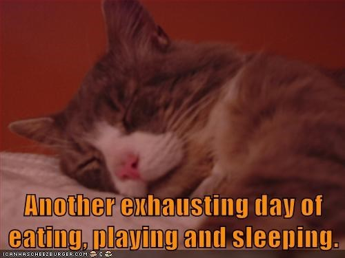 Cat - Another exhausting day of eating, playing and sleeping. ICANHASCHEEZEURGER COM