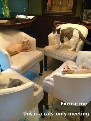 Property - Excuse me this is a cats-only meeting.