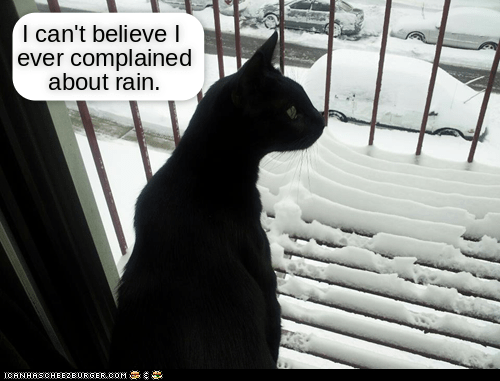 Cat - I can't believel ever complained about rain ICANHASCHEEZEURGEROOM