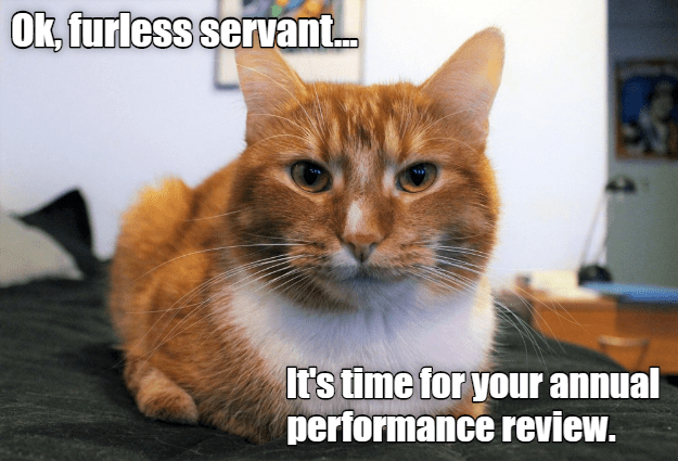 Cat - Ok, furless servant. It's time for your annual performance review.