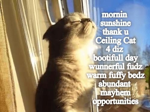Cat - mornin sunshine thank u Ceiling Cat 4 diz bootifull day wunnerful fudz warm fuffy bedz abundant mayhem opportunities