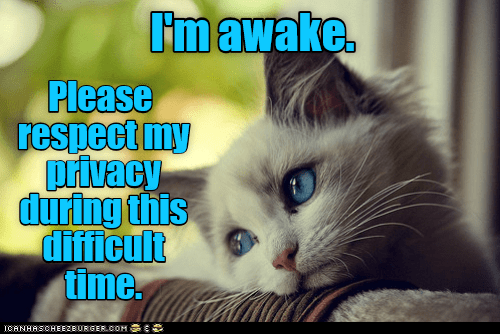 Cat - Fmawake Please respect my privacy during this difficult time. CANHASCHEE2BURGER cOM