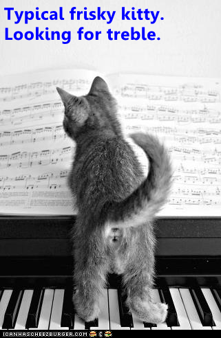 Cat - Typical frisky kitty Looking for treble. TCANHASCHEEZERGER C0M