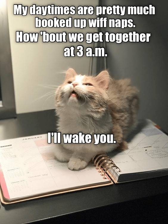 Cat - My daytimes are pretty much booked up wiff naps. How bout we get together at 3 a.m. Il wake you.