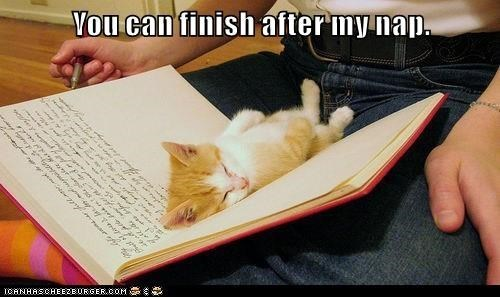 Cat - You can finish after my nap. 1CANHASCHEE2EURGER cOM T