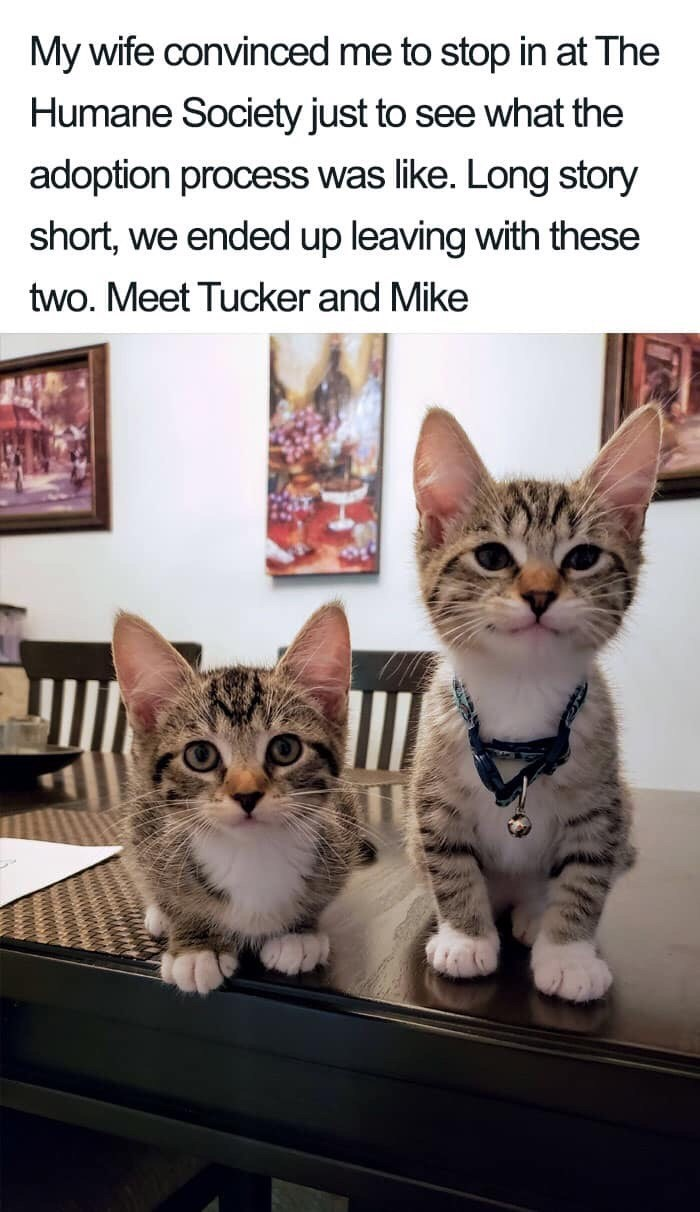 Cat - My wife convinced me to stop in at The Humane Society just to see what the adoption process was like. Long story short, we ended up leaving with these two. Meet Tucker and Mike