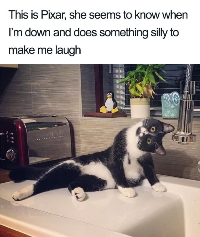 Cat - This is Pixar, she seems to know when I'm down and does something silly to make me laugh