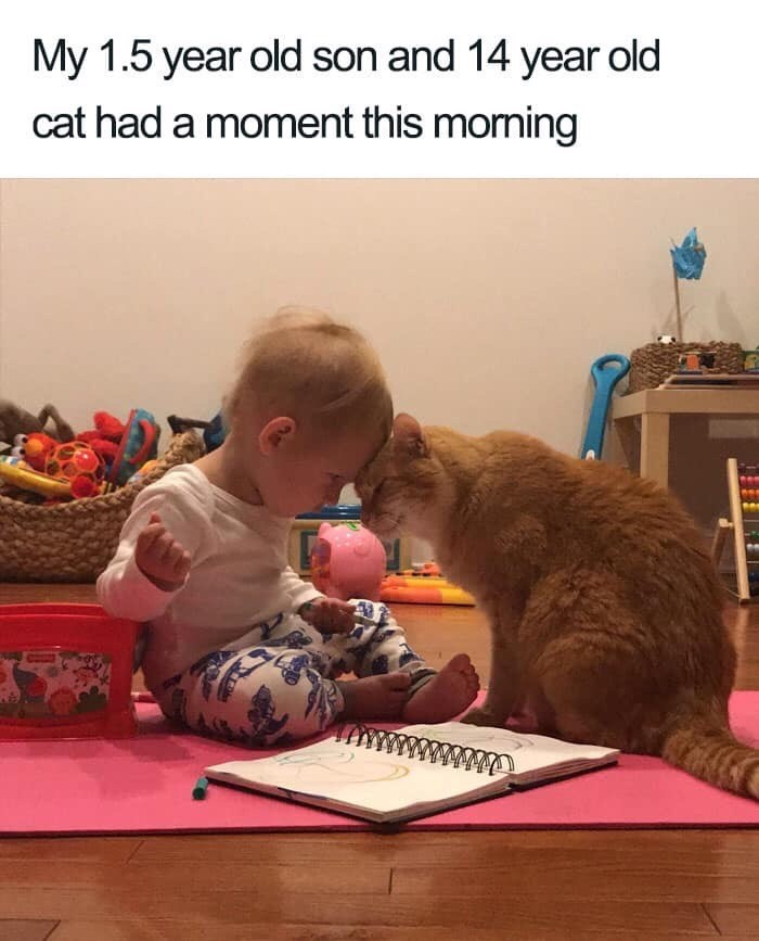 Adaptation - My 1.5 year old son and 14 year old cat had a moment this moming